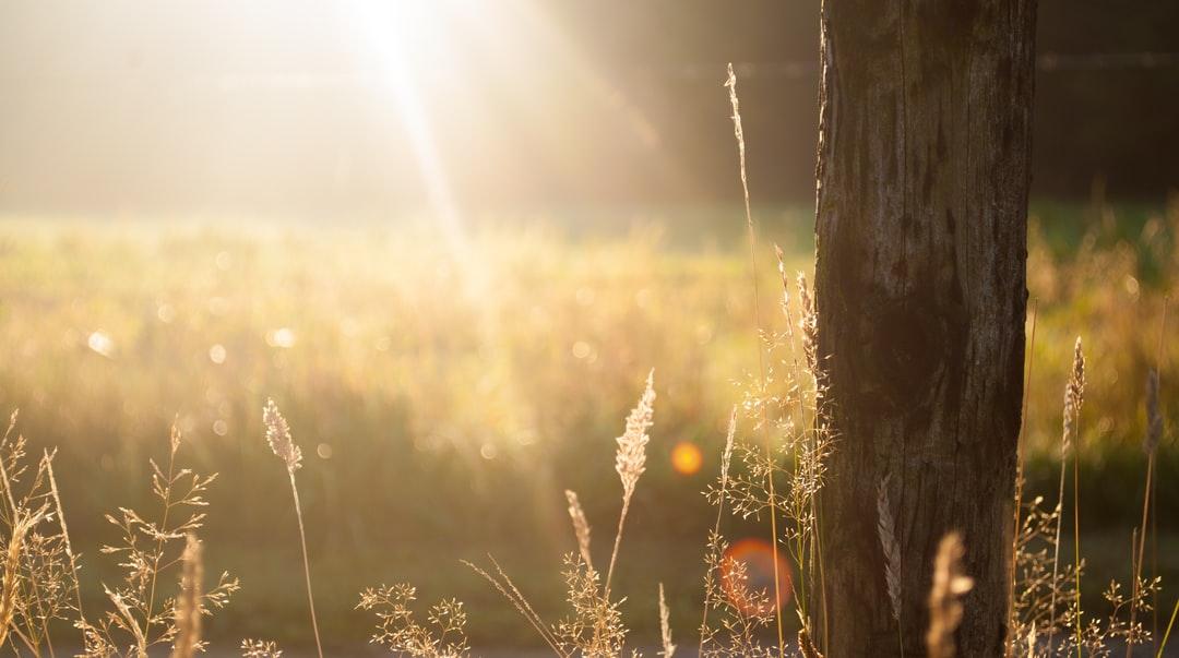 sunshine on field
