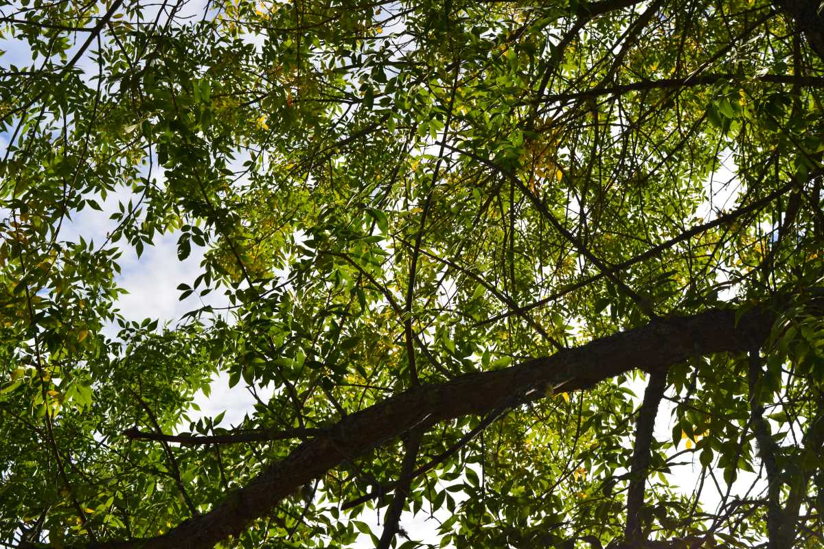tree leaves above