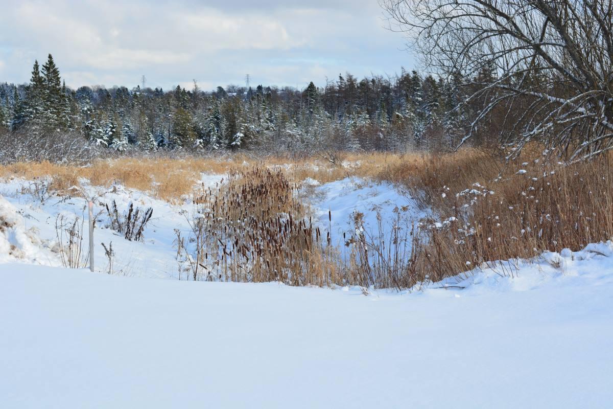 fresh fallen snow in grassy field