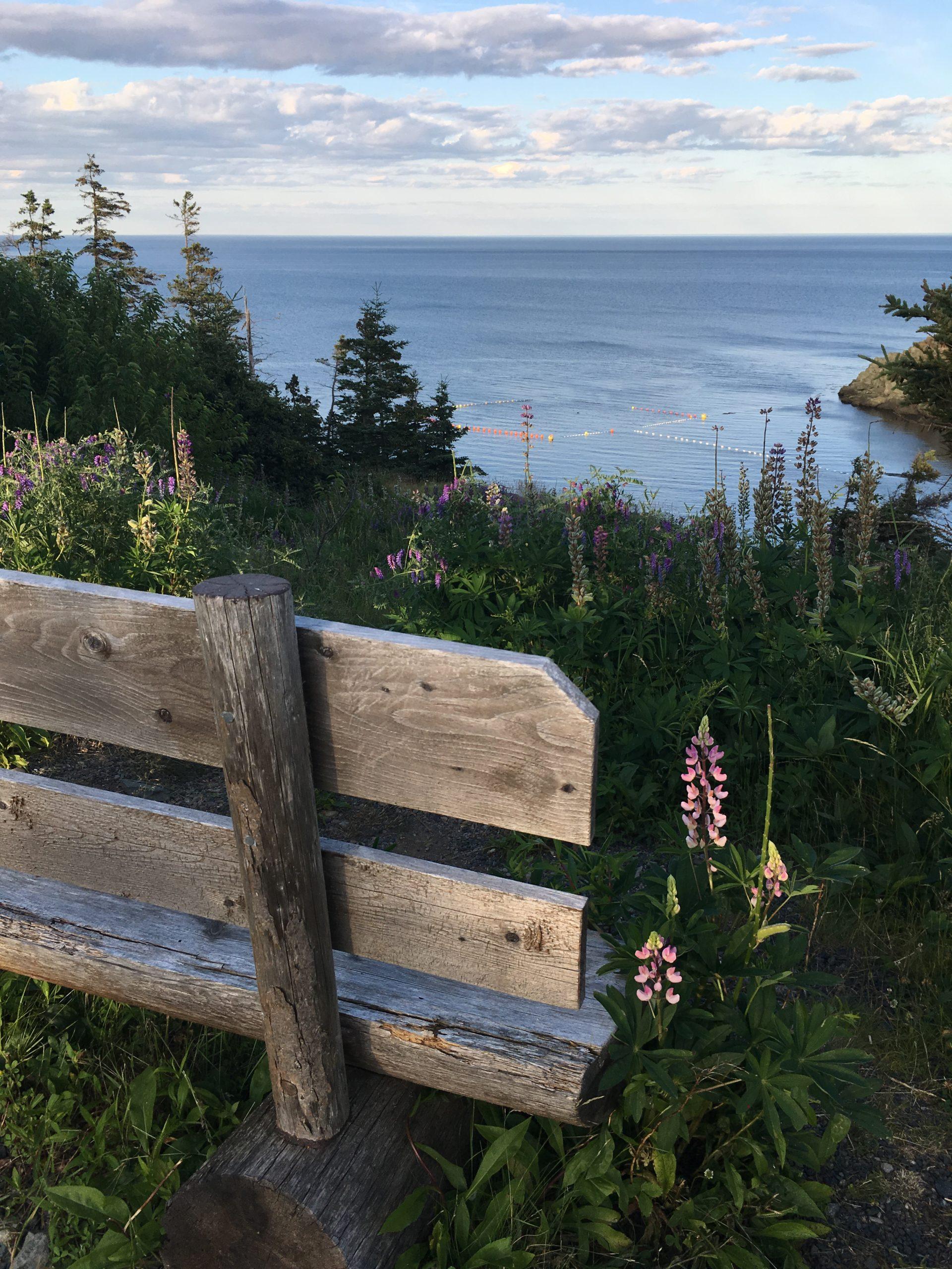 bench overlooking the ocean